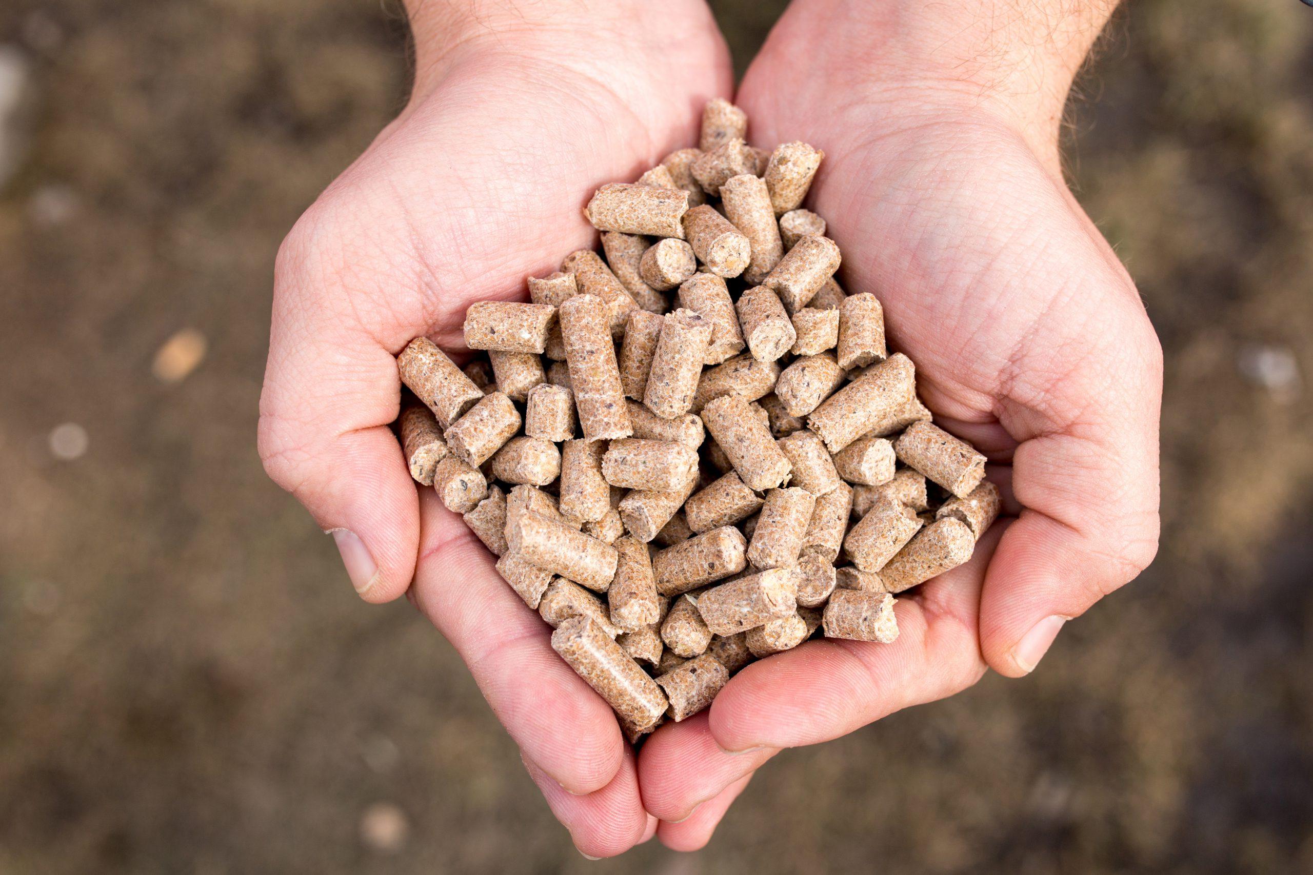 Ngành thức ăn chăn nuôi: Hội nhập để phát triển
