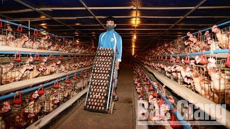 Giá vịt, trứng các loại ở Bắc Giang giảm vì dịch viêm phổi cấp