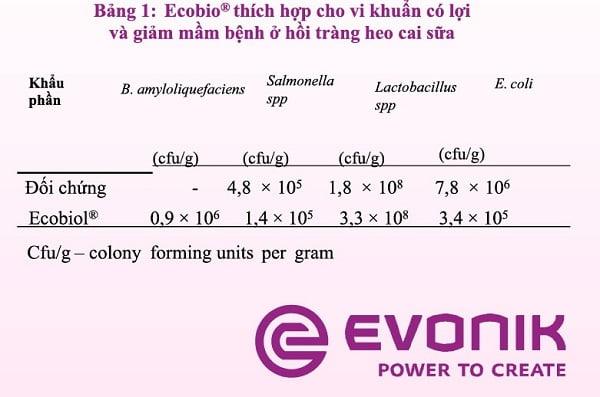 Chất ổn định hệ vi sinh vật đường ruột, Bacillus amyloliquefaciens CECT 5940 (Ecobiol®) cải thiện sức khỏe đường ruột và năng suất của heo