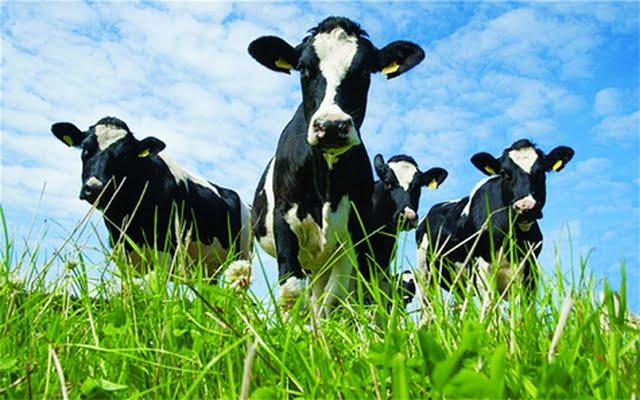 Chọn giống vật nuôi theo bộ gen – Kỷ nguyên mới của khoa học chọn giống vật nuôi