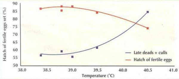 Điều kiện ấp trứng và năng suất gà thịt