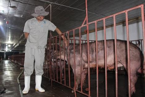 Hệ số di truyền một số tính trạng trên lợn