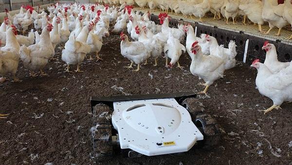 8 sản phẩm công nghệ mới nhất trong lĩnh vực chăn nuôi gia cầm